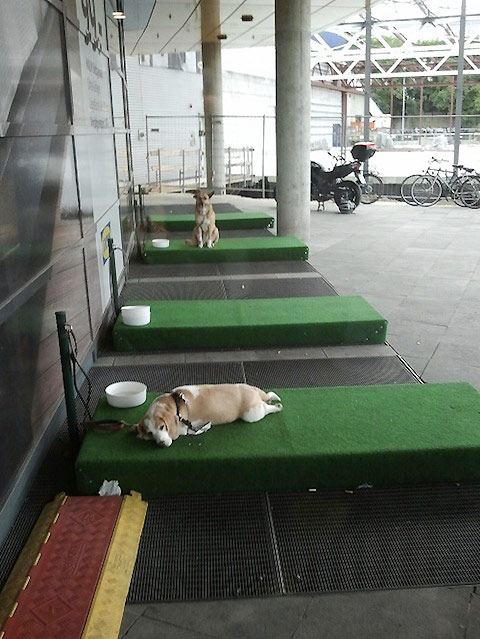 ikea-germany-now-has-parking-lots-for-dogs.jpg